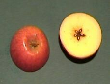Image - apple half with star